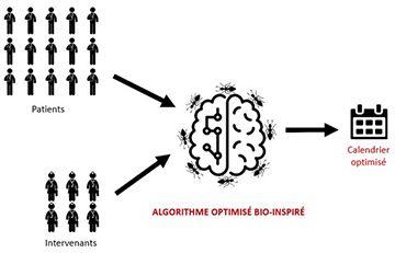 Schéma d'un algorithme optimisé bio-inspiré.